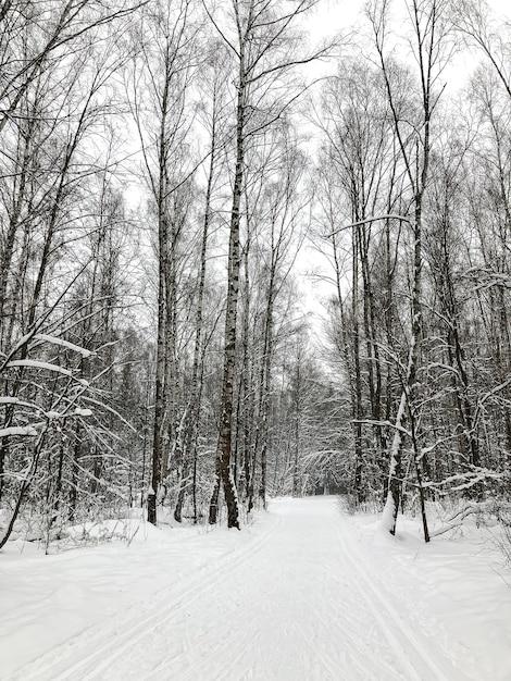 Schneebedeckte straße durch birkenhain-winterwaldlandschaft Premium Fotos