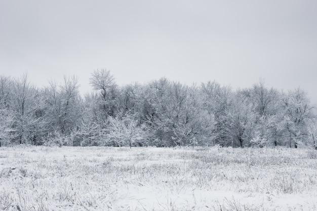 Schneebedeckter wald. schneebedeckte bäume. der dichte wald unter dem schnee. Premium Fotos
