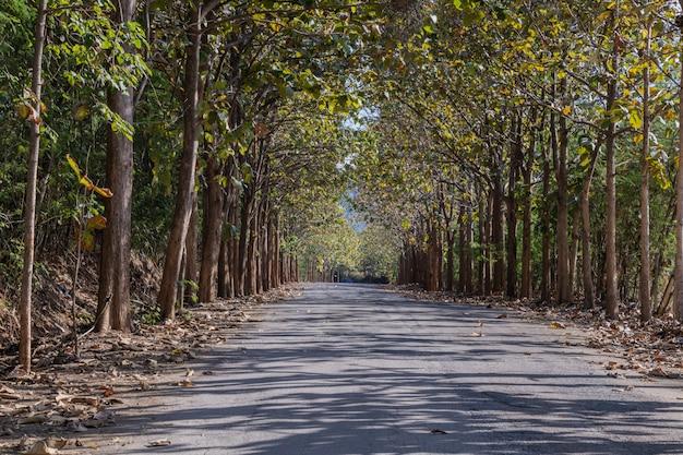 Schön ein weg durch teakholzbaum. Premium Fotos