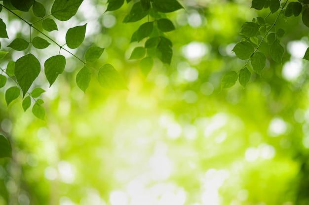 Schöne ansicht der nahaufnahme des naturgrünblattes auf dem grün verwischt Premium Fotos