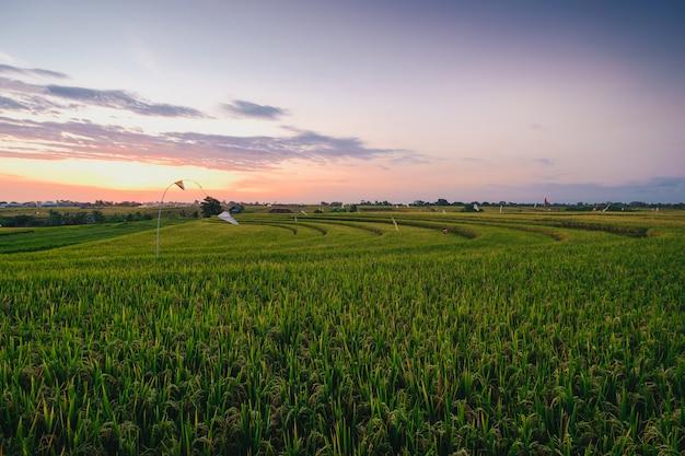 Schöne ansicht eines feldes bedeckt in grünem gras gefangen in canggu, bali Kostenlose Fotos