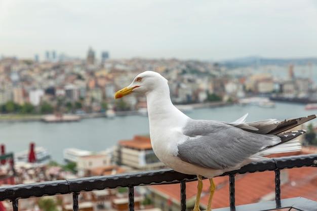 Schöne ansicht von oben auf die dächer von istanbul und den bosporus. wunderschöne landschaft. Premium Fotos