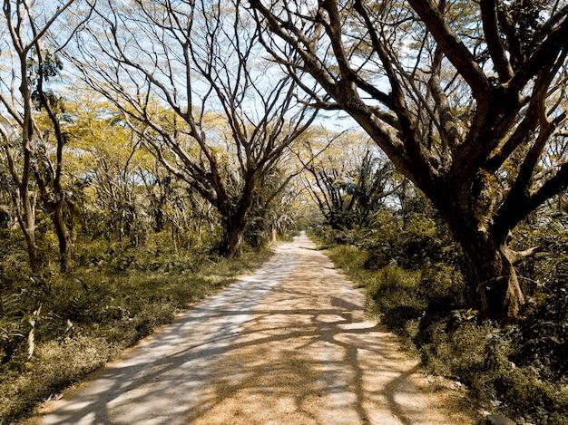 Schöne aufnahme eines leeren weges inmitten von blattlosen bäumen und grünen pflanzen Kostenlose Fotos