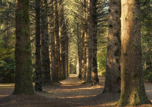 Schöne aufnahme eines weges in der mitte eines waldes mit großen hohen bäumen am tag Kostenlose Fotos
