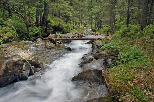 Schöne aussicht auf den bergfluss im sommer Premium Fotos