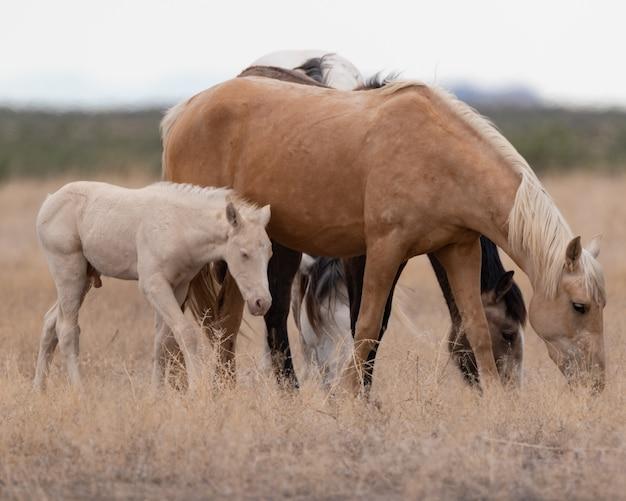 Schöne aussicht auf die gruppe der pferde auf dem feld Kostenlose Fotos