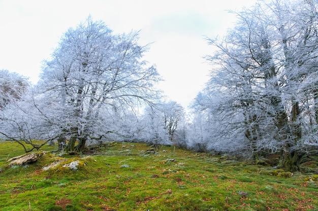 Schöne aussicht auf frostige kahle bäume auf einem berg Kostenlose Fotos