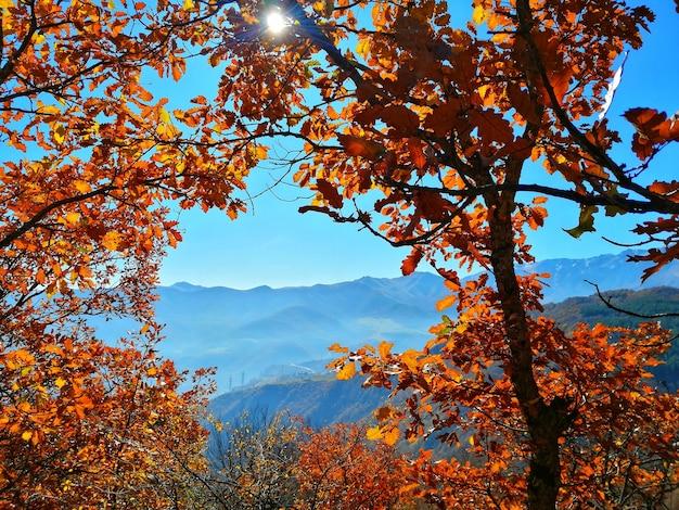 Schöne bäume Kostenlose Fotos