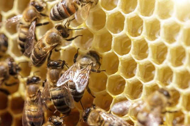 Schöne bienen auf bienenwaben mit honig nahaufnahme Premium Fotos