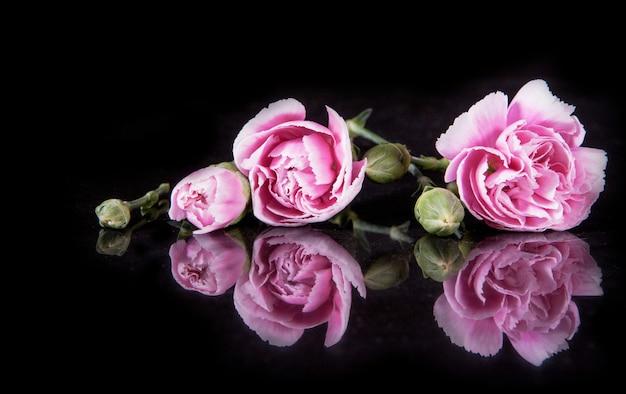 Schöne blühende gartennelkenblume auf schwarzem Premium Fotos