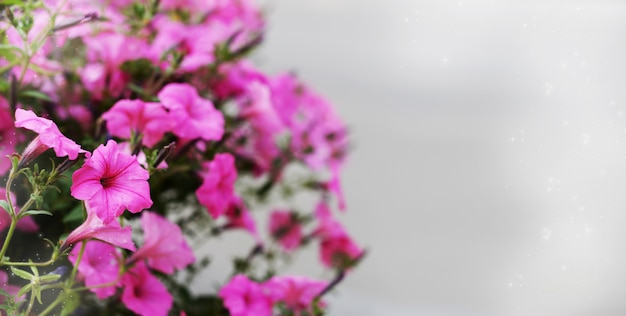 Schöne blume violetter schmerle auf hintergrund im frühjahr und sommer am muttertag Premium Fotos