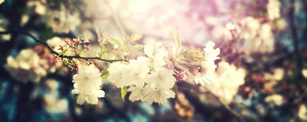 Schöne bunte blume hintergrund unschärfe. horizontal. frühlingskonzept toning selektiver fokus Kostenlose Fotos
