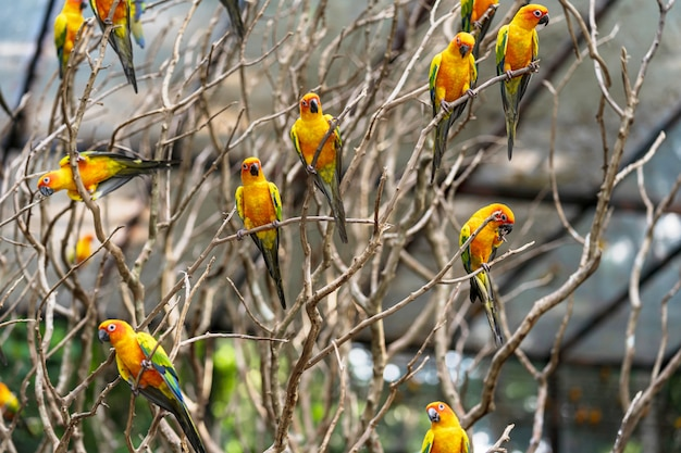 Schöne bunte papageienvögel sun conure Premium Fotos