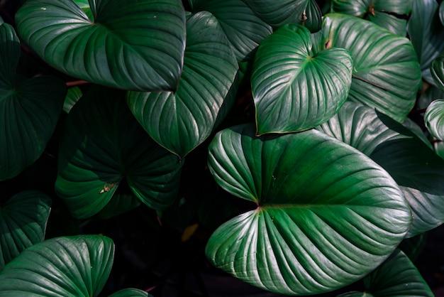 Schöne dunkelgrüne blätter in einem dschungel Kostenlose Fotos