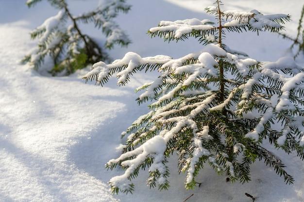 Schöne erstaunliche weihnachtswinterberglandschaft. kleine junge grüne tannenbäume bedeckt mit schnee Premium Fotos