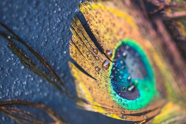 Schöne exotische pfaufeder auf schwarzem hintergrund Kostenlose Fotos