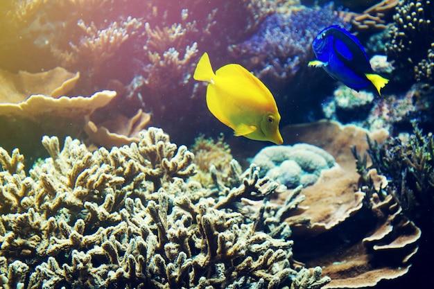 Schöne fische rotes meer korallen tier. horizontal mit kopierraum. Kostenlose Fotos