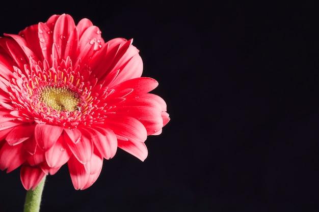 Schöne frische rosa blume im tau Kostenlose Fotos