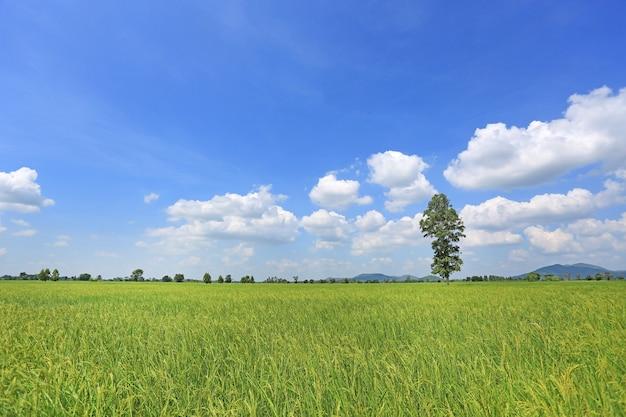 Schöne geschwollene wolke auf blauem himmel im jungen grünen reisfeld und -baum. Premium Fotos