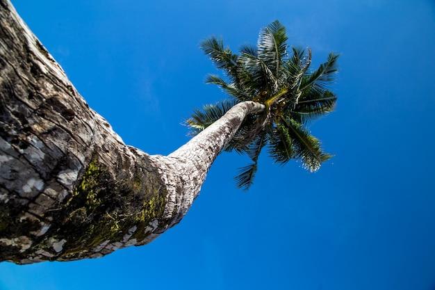 Schöne große palme am meer, das konzept von freizeit und reisen Kostenlose Fotos