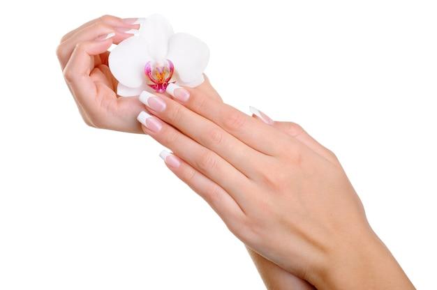 Schöne gut gepflegte weibliche hand mit eleganten fingern und französischer maniküre halten die weiße blume Kostenlose Fotos