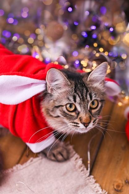 Schöne katze in der weihnachtsmann-kleidung. Premium Fotos
