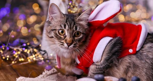 Schöne katze in einem weihnachtsmann-hut. Premium Fotos