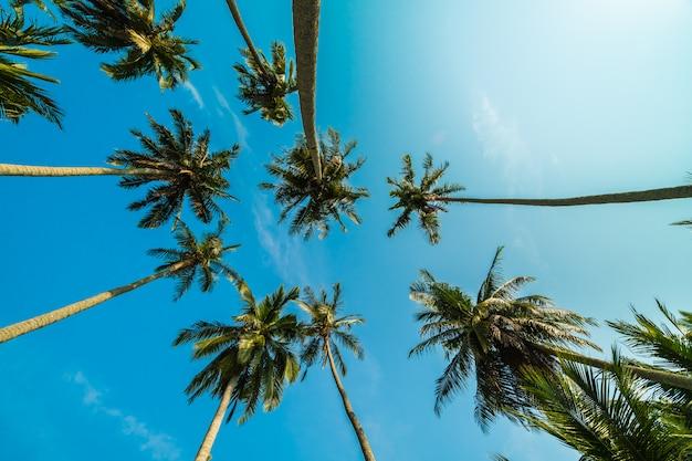 Schöne kokosnusspalme auf blauem himmel Kostenlose Fotos