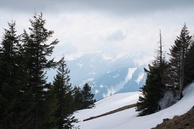 Schöne landschaft der hohen berge bedeckt mit schnee und grünen tannen unter einem bewölkten himmel Kostenlose Fotos