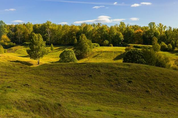 Schöne landschaft des grünen waldes. wald in den hügeln. sonniger tag Premium Fotos