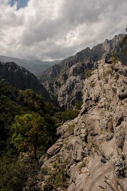 Schöne landschaft des hügels mit bäumen in der tageszeit Premium Fotos