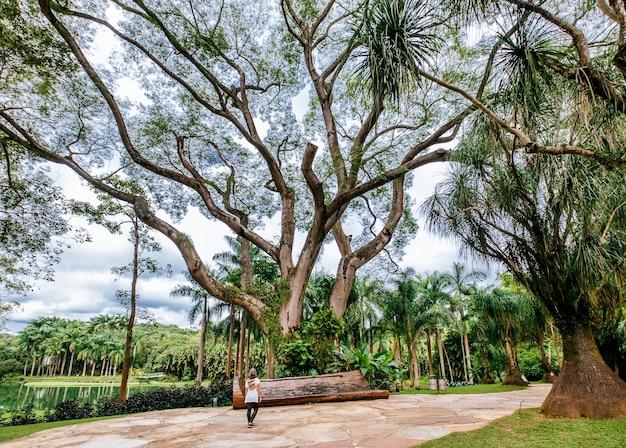 Schöne landschaft des mangal das garcas parks in der stadt belem in brasilien Kostenlose Fotos
