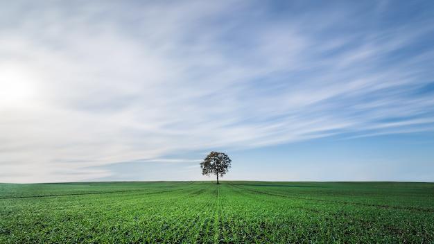 Schöne landschaft einer grünen wiese unter dem bewölkten himmel Kostenlose Fotos