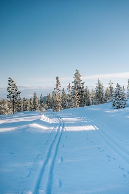 Schöne landschaft einer schneebedeckten gegend mit vielen grünen bäumen in norwegen Kostenlose Fotos