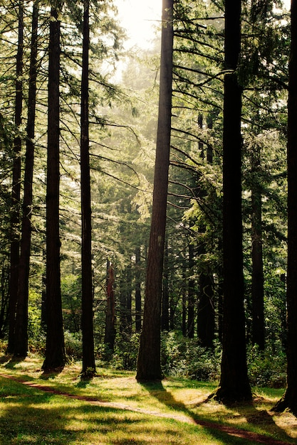 Schöne landschaft eines waldes Kostenlose Fotos
