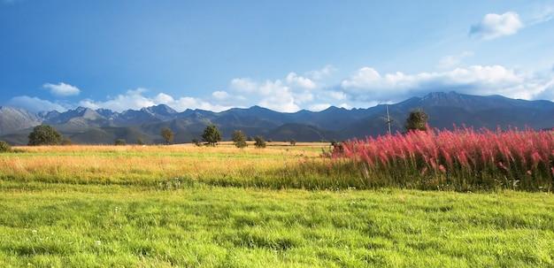 Schöne landschaft mit vegetation und bäume Kostenlose Fotos