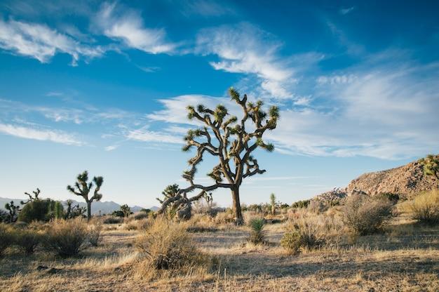 Schöne landschaftsaufnahme von wüstenbäumen in einem trockenen feld mit erstaunlichem bewölktem blauem himmel Kostenlose Fotos