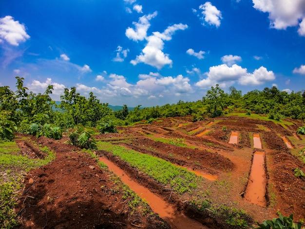 Schöne landwirtschaftliche felder Premium Fotos