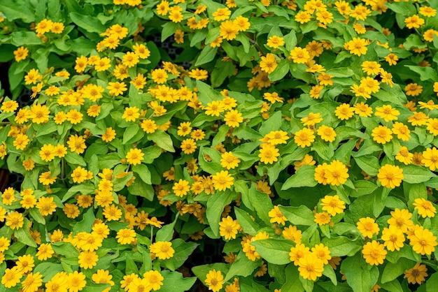 Schöne nahaufnahme schuss von gelben blumenbüschen - perfekt für hintergrund Kostenlose Fotos