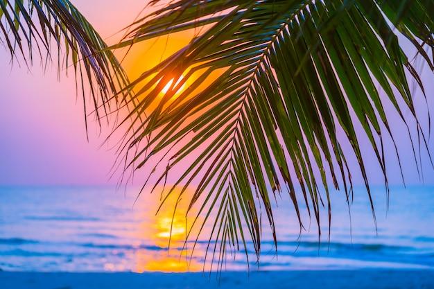 Schöne natur im freien mit kokosnussblatt mit sonnenaufgangs- oder sonnenuntergangzeit Kostenlose Fotos