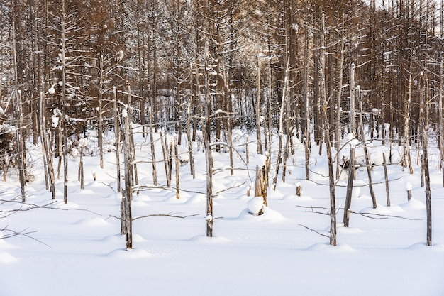 Schöne naturlandschaft im freien mit blauem teichbaumast in der schneewintersaison Kostenlose Fotos