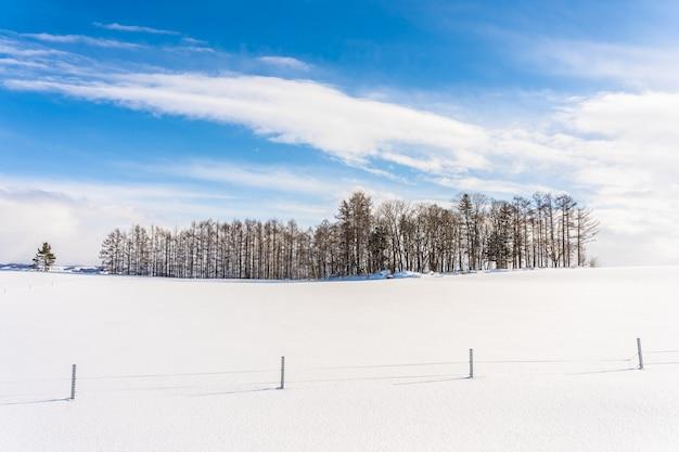 Schöne naturlandschaft im freien mit gruppe des baumasts in der schneewintersaison Kostenlose Fotos