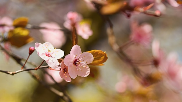 Schöne naturszene mit blühendem baum und sonne Kostenlose Fotos