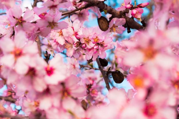 Schöne naturszene mit blühendem baum Premium Fotos