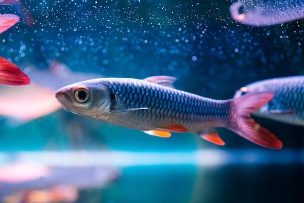 Schöne nette fische im zooaquarium. Premium Fotos