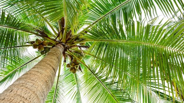 Schöne palme Premium Fotos