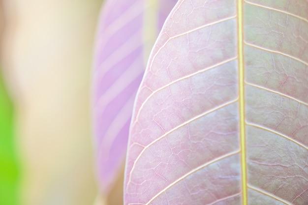 Schöne purpurrote blätter und sunligth im garten zur sommerzeit. Premium Fotos