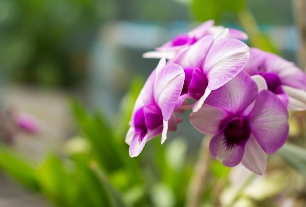 Schöne purpurrote orchideen mit vorgewähltem fokus. Premium Fotos