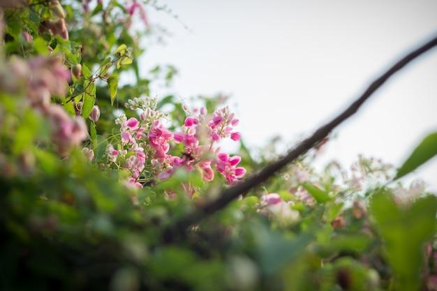 Schöne rosa blume Premium Fotos