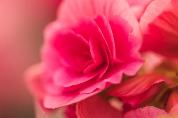 Schöne rosa frische blüten Kostenlose Fotos